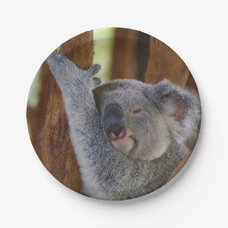Het Bord van de Koala van Peekaboo