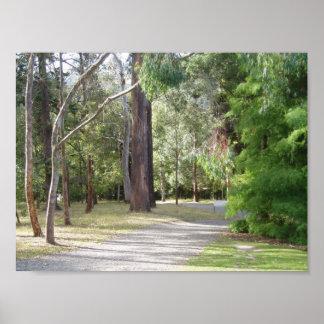 Het bos van de Botanische Tuinen van Dunedin Poster
