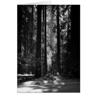 Het Bos van de Californische sequoia, het Bosje Wenskaart