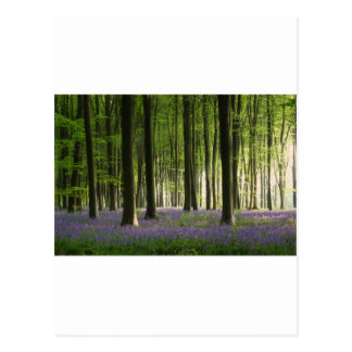 Het Bos van het klokje Briefkaart