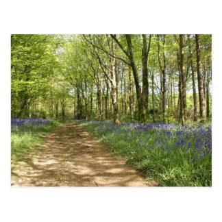 Het Bos van Idless Briefkaart