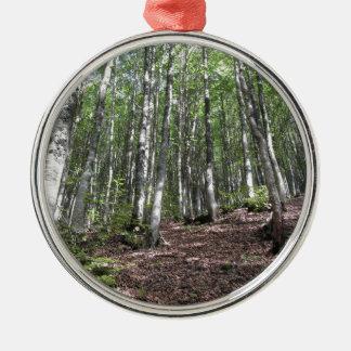 Het boslandschap van de beuk in de zomer. zilverkleurig rond ornament