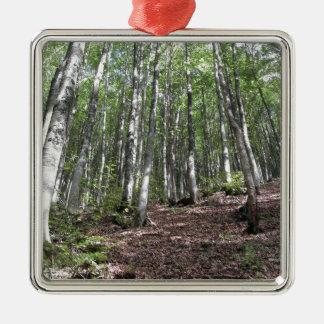 Het boslandschap van de beuk in de zomer. zilverkleurig vierkant ornament