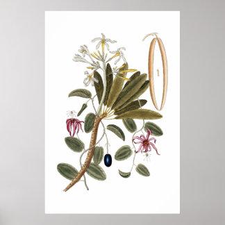 Het botanische poster van de vanille