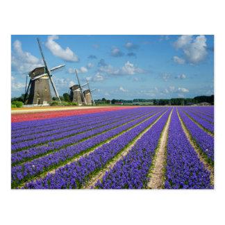 Het briefkaart van bloemen en van windmolens