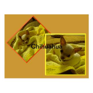 Het Briefkaart van Chihuahua