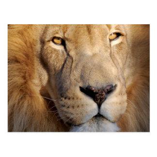 Het Briefkaart van de Afbeeldingen van de leeuw