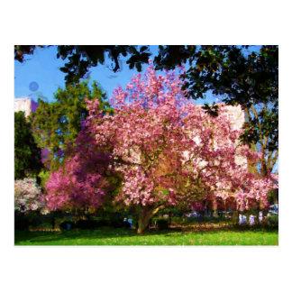 Het Briefkaart van de Boom van de magnolia
