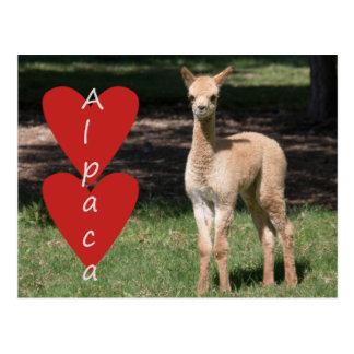 Het briefkaart van de de alpacaliefde van het baby