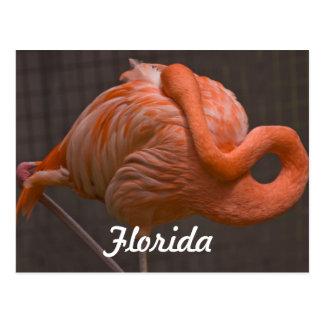 Het Briefkaart van de Flamingo van Florida