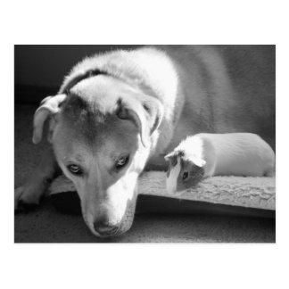 Het Briefkaart van de hond en van het Proefkonijn