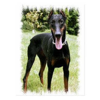 Het Briefkaart van de Hond van Pinscher van