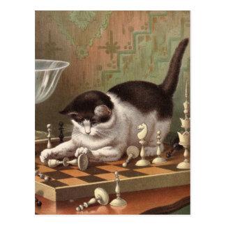 Het briefkaart van de Kat van het schaak