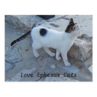 Het Briefkaart van de Katten van Ephesus