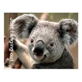 Het Briefkaart van de koala