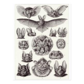 Het Briefkaart van de Kunst van Ernst Haeckel Chi Wens Kaart