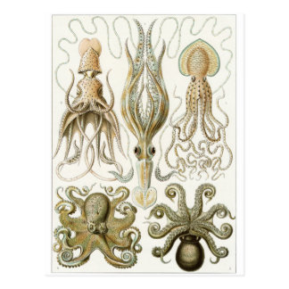 Het Briefkaart van de Kunst van Ernst Haeckel Gam Wenskaarten