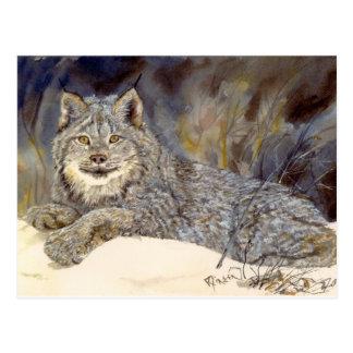 Het Briefkaart van de lynx