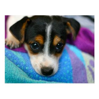 Het Briefkaart van de Ogen van de Hond van het