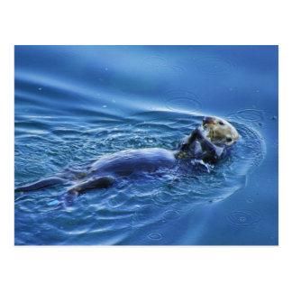 Het Briefkaart van de Otter van het zee