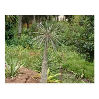 Het Briefkaart van de Palm van Madagascar