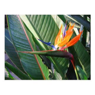 Het Briefkaart van de paradijsvogel