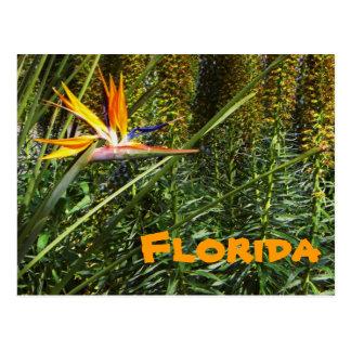Het Briefkaart van de Paradijsvogel van Florida