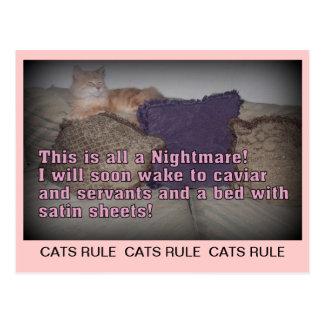 Het Briefkaart van de Regel van katten