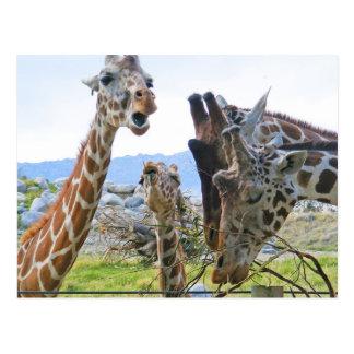 Het Briefkaart van de Roddel van de giraf