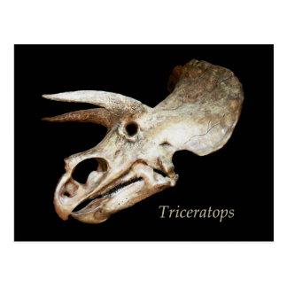 Het Briefkaart van de Schedel van Triceratops