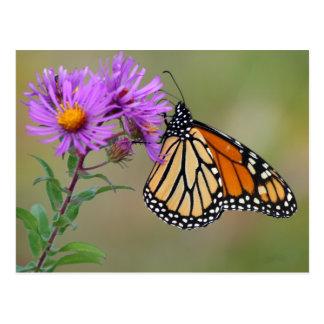 Het Briefkaart van de vlinder