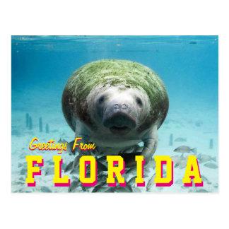 Het Briefkaart van Florida van Manatee