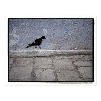 Het Briefkaart van Graffiti van de duif