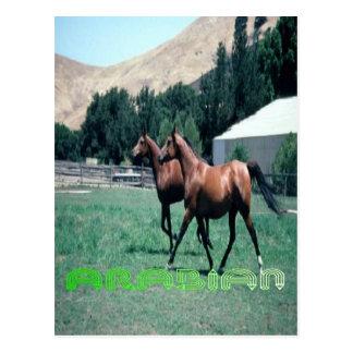 Het briefkaart van het Arabische paard