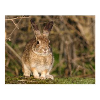 Het Briefkaart van het konijn