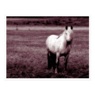 Het Briefkaart van het paard