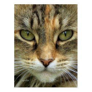 Het Briefkaart van het Portret van de Kat van de