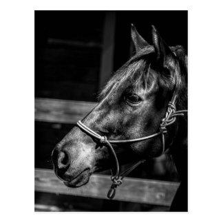 Het Briefkaart van het Profiel van het paard Wens Kaarten