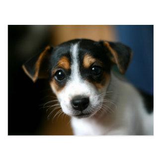 Het Briefkaart van het puppy - Hefboom Russell