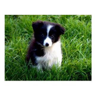 Het Briefkaart van het Puppy van border collie