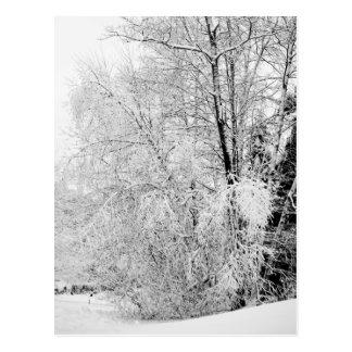 Het Briefkaart van het Wit van de winter
