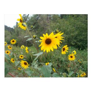 Het Briefkaart van New Mexico Wildflowers