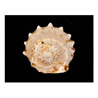 Het Briefkaart van Shell van de kroonslak