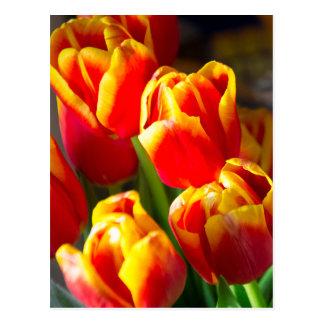 Het briefkaart van tulpen