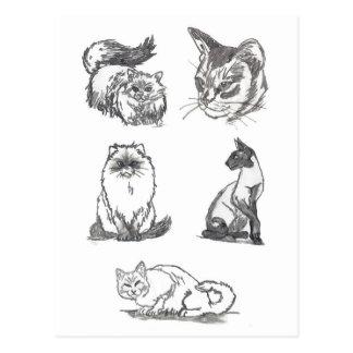 Het briefkaart van vijf Katten door Nicole Janes
