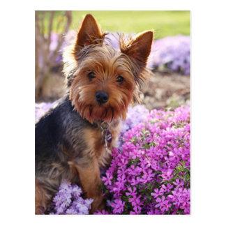 Het Briefkaart van Yorkshire Terrier