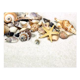 Het Briefkaart van zeeschelpen