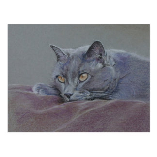 het Britse blauwe shorthairkat schilderen Briefkaart