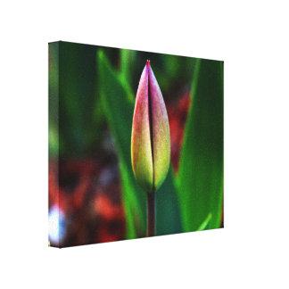Het Canvas van de Trots van de lente Stretched Canvas Afdruk