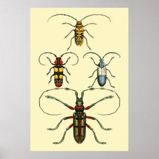 Het Collectie van de Insecten van de kever Poster